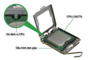 Cách ráp CPU vào mainboard chuẩn LGA775  hoc sua chua may tinh noi hoc sua chua may tinh  dia chi hoc sua chua may tinh