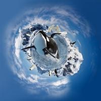 Tạo Một Khung Cảnh Tuyệt Đẹp ở Bắc Cực